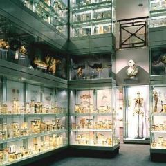 Collezione delle Cere Anatomiche User Photo