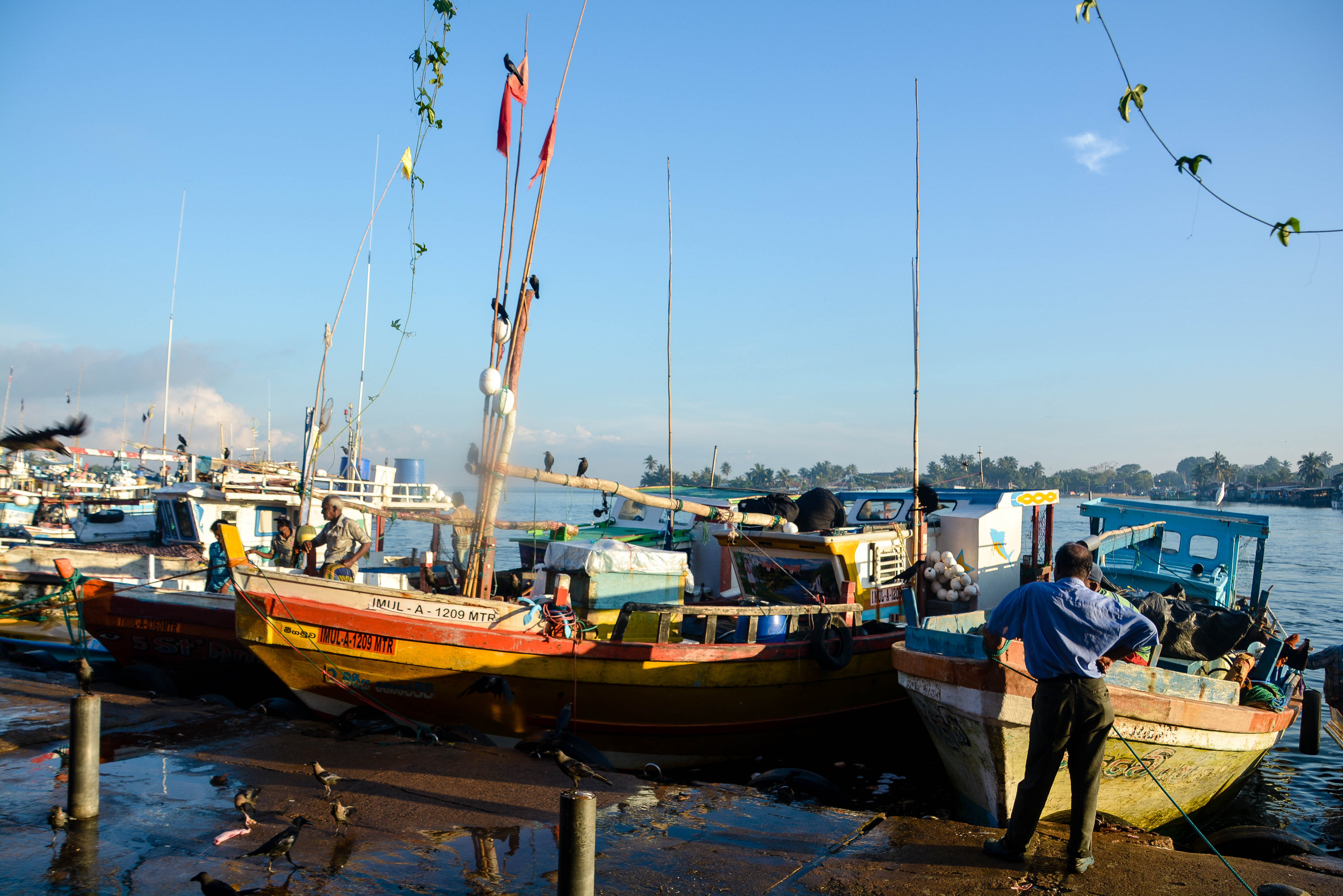 尼甘布中心魚市場