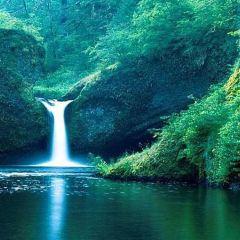 麥秀國家森林公園用戶圖片