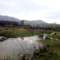 風情小鎮皋城村用戶圖片