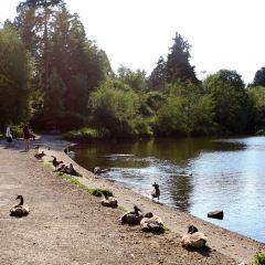 洛斯特湖用戶圖片