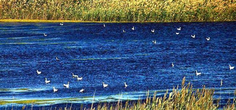 烏倫古湖2