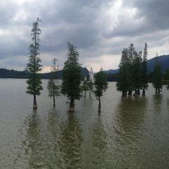 The Fairy Lake User Photo