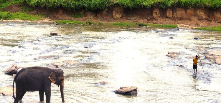 品納維拉大象孤兒院3