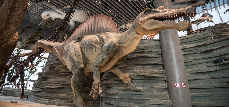 Shanghai Natural History Museum3