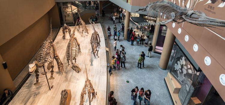 上海自然博物館1