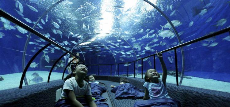 上海海洋水族館3