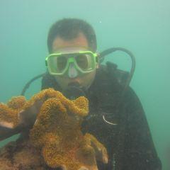 위주도 다이빙 여행 사진
