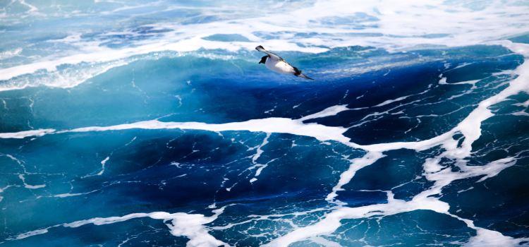 Drake Passage3
