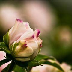 牡丹園用戶圖片