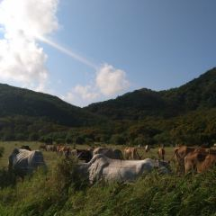 Kenting Rangeland User Photo