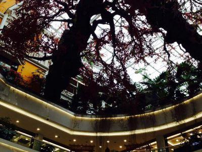 Fukang Dream Paradise