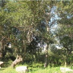 濕地古楊風景區用戶圖片