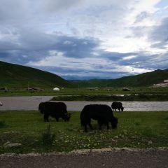 Seda Jinma Grassland User Photo