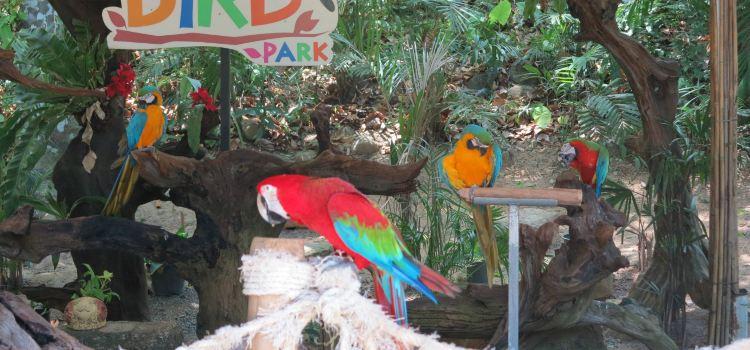 Phuket Bird Park2