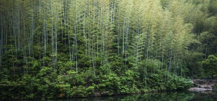 Mukeng Bamboo Sea1