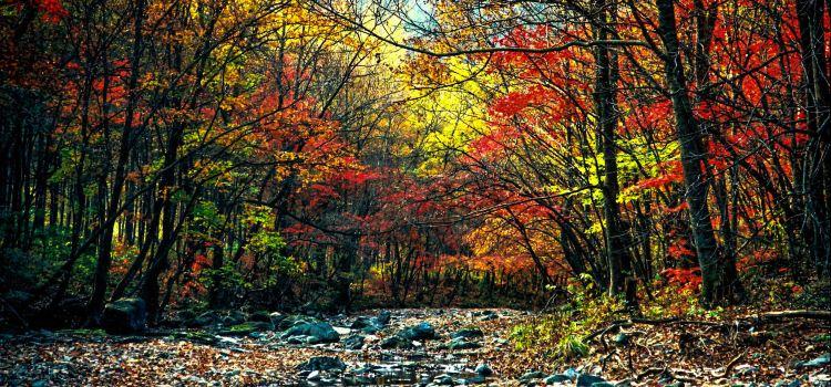 관문산 국가삼림공원1
