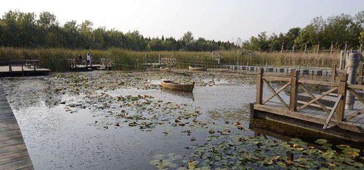 溱湖國家濕地公園1
