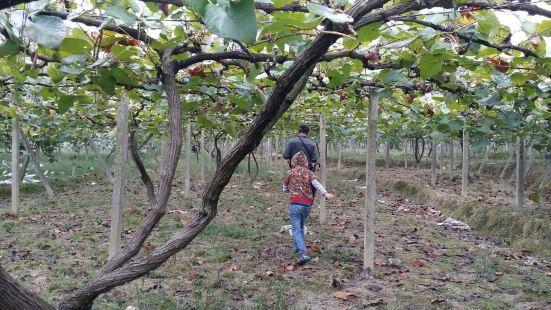 中國南方葡萄溝