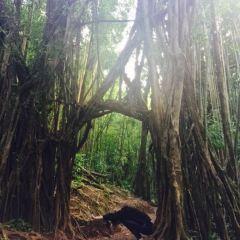 Manoa Falls User Photo