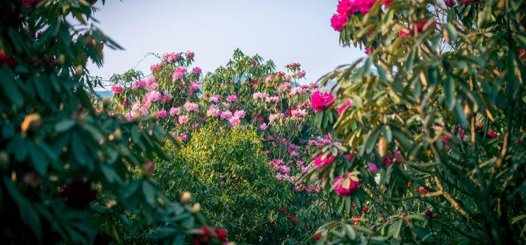 百里杜鵑風景區3