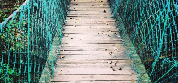 千島湖森林氧吧2