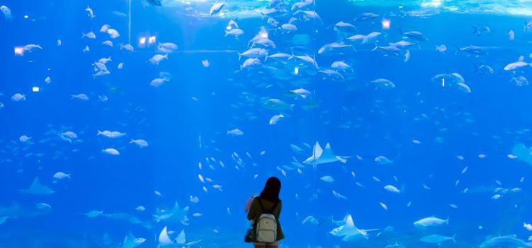 Aqua Planet Jeju