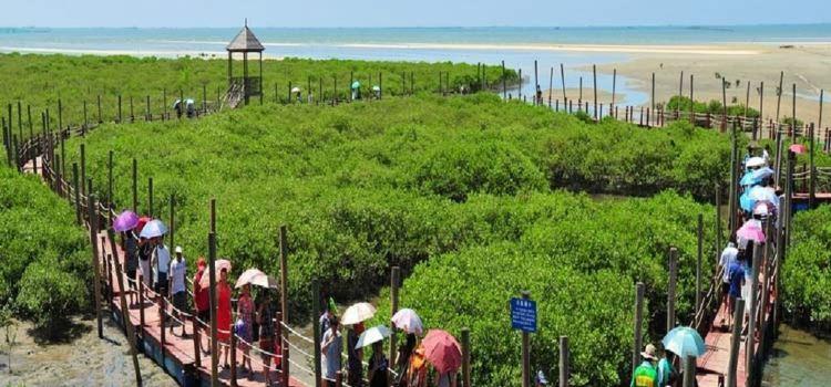 베이하이 진하이완 맹그로브 생태공원1