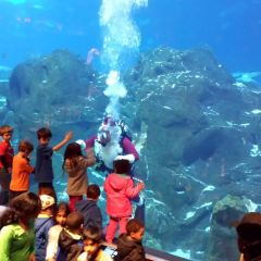 Adventure Aquarium User Photo