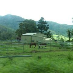 Springbrook National Park User Photo