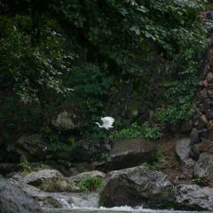 神麗峽用戶圖片