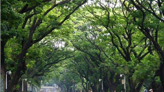 더 필리핀 마닐라 대학