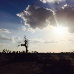 괴수림 여행 사진