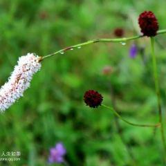 Birch Ridge User Photo