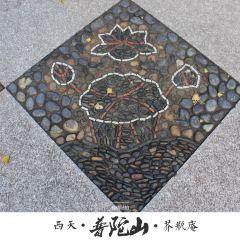 芥缾禪院用戶圖片