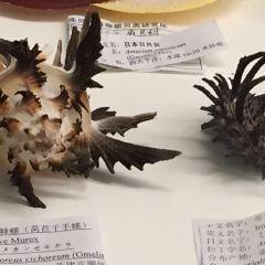 大連貝殼博物館用戶圖片