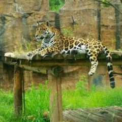 Changsha Ecological Zoo User Photo