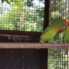 하이난 열대 야생동식물원 여행 사진