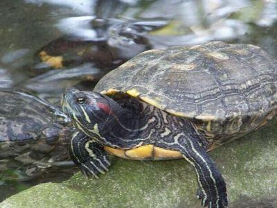 Manila Zoological and Botanical Garden