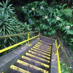 Kaumana Caves Co Park User Photo