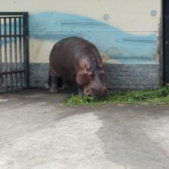無錫動物園(太湖歡樂園)用戶圖片