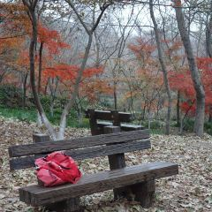 Red Leaves Valley User Photo