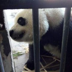 熊貓樂園用戶圖片