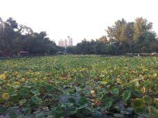 延吉公园-延吉-linlin-