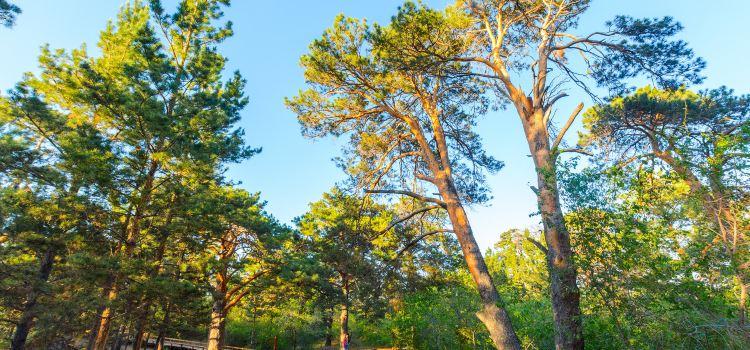 Hailar National Forest Park