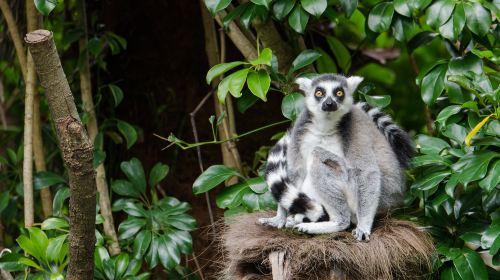 奧克蘭動物園