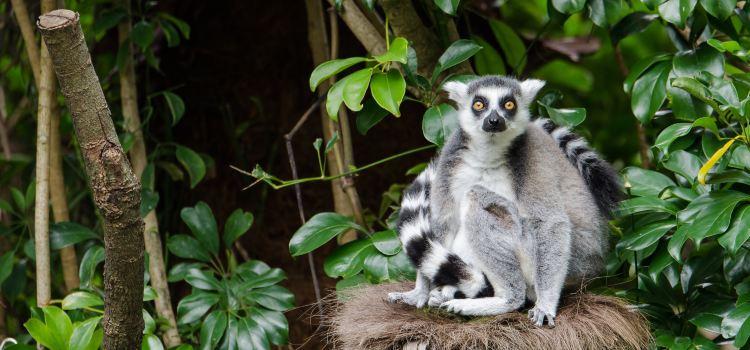 Auckland Zoo1