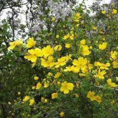 賀蘭山原始森林用戶圖片