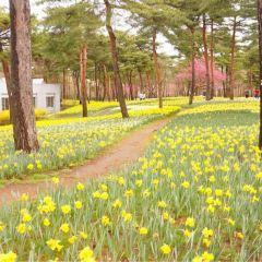 國營常陸海濱公園用戶圖片