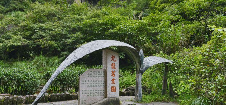 Dahongpao Scenic Area